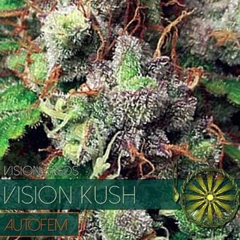 Vision Kush Auto
