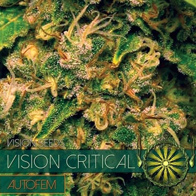 Vision Critical Auto
