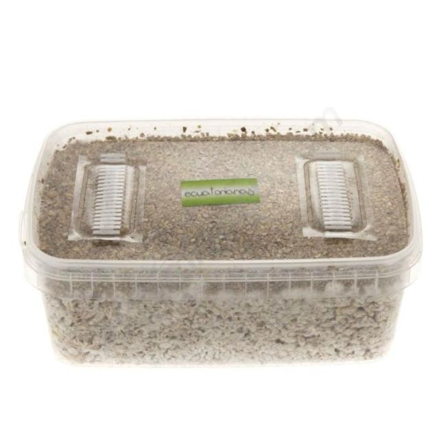 Kit champignons équatoriens