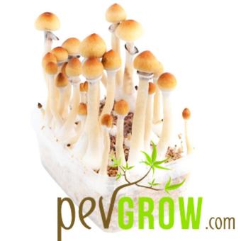 Amazonian mushroom growing kit