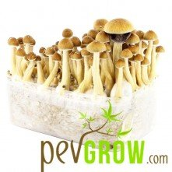 Colombian mushroom cultivation kit