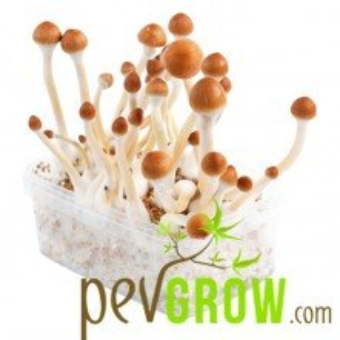 B+ mushroom cultivation kit