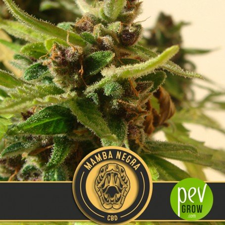 Black Mamba Auto CBD - Blimburn Seeds