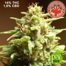 B3 Medical - Pure Seeds