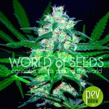 Pakistan Valley - World of Seeds