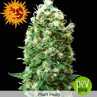 Phatt Fruity - Barneys Farm