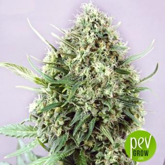 Jack Diesel - Positronics