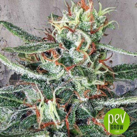 crystal-cloud-ministry-of-cannabis