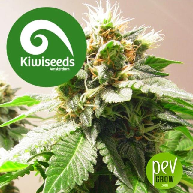 Mount Cook - Kiwi Seeds
