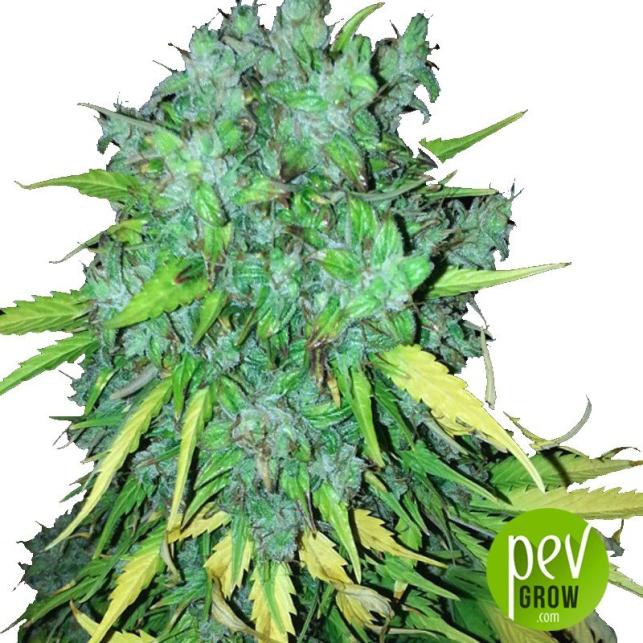 Maxi Gom Grass-o-matic