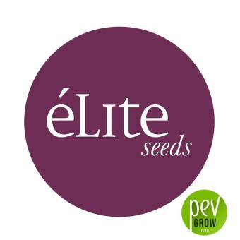 Sologerol Auto - Elite Seeds