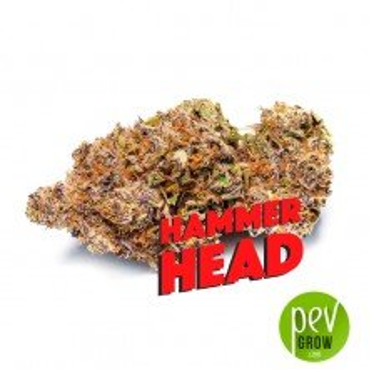Hammerhead - Phat Panda