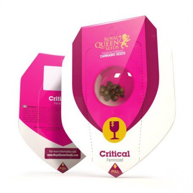 Critical Royal Queen Seeds