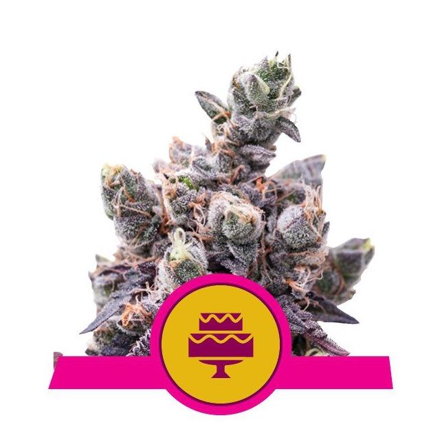 Wedding Gelato - Royal Queen Seeds