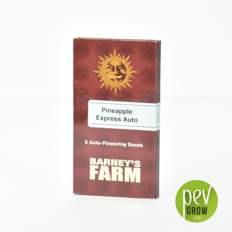 Pineapple Express Barneys Farm 4