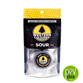 Seatown Lemon Haze - Sour, Western Cultured Seeds