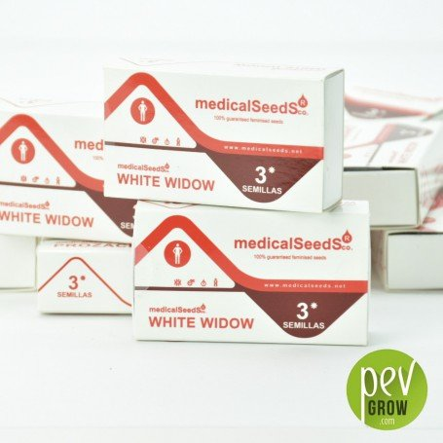 White Widow (Medicinal) 2