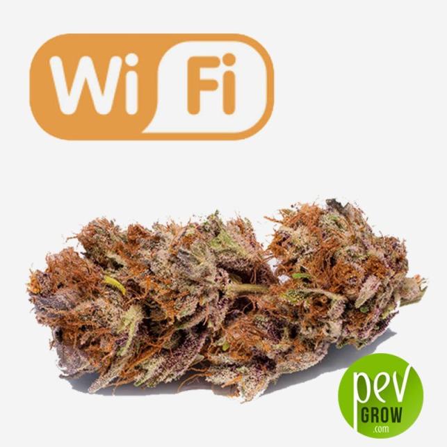 Wifi planta - Phat Panda