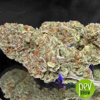 Green Doctor - Medical Marijuana Genetics