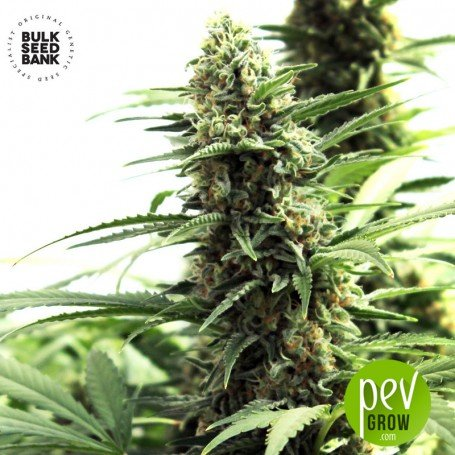 Marley's Bud - Bulk Seed Bank