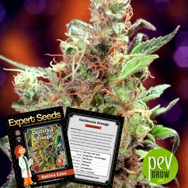 California Orange - Expert Seeds