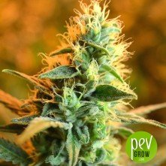 CBD Jean Guy - House of the Great Gardener