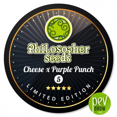 Cheese x Purple Punch - Philosopher Seeds