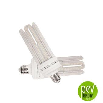 Ampoule LED Solux