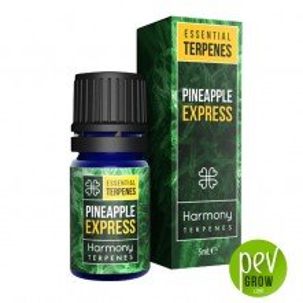 Terpènes Harmony - Pineapple Express