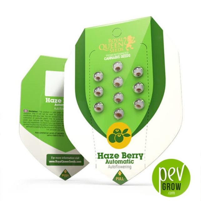 Haze Berry Auto - Royal Queen Seeds