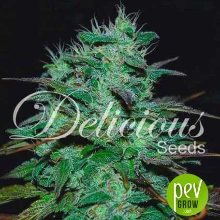 Chocobang - Delicious seeds