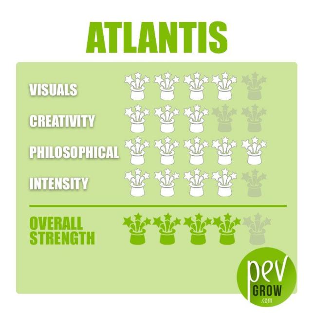 Atlantis-Zaubertrüffel-Zuchtset
