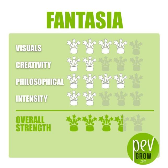 Fantasia-Zaubertrüffel-Zuchtset