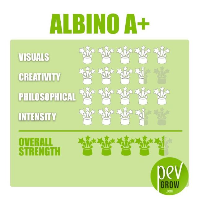 Kit de cultivo de setas Psilocybe Cubensis Albino A+