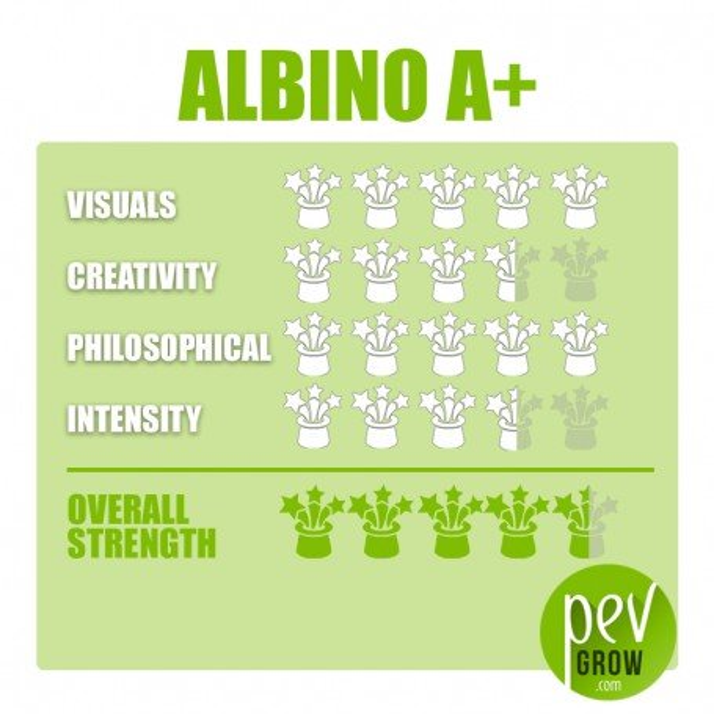 Psilocybe Cubensis Albino A+ mushroom growing kit