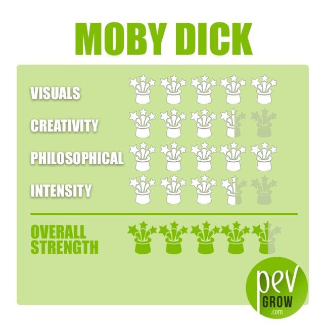 Kit de culture des champignons Moby Dick