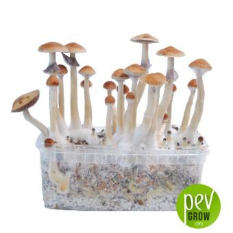 Treasure Coast mushroom growing kit