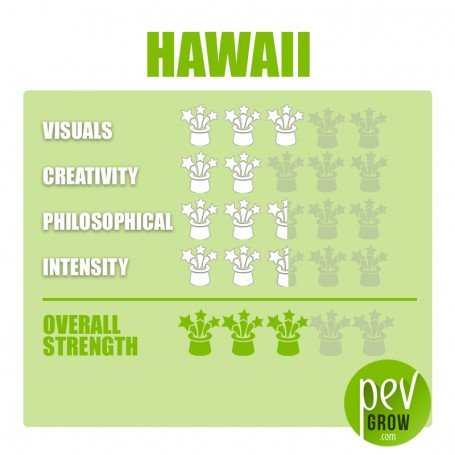 Kit de cultivo de setas Hawaii