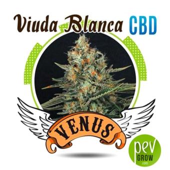 Viuda Blanca CBD - Venus Genetics