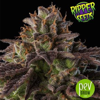 Kmintz - Ripper Seeds