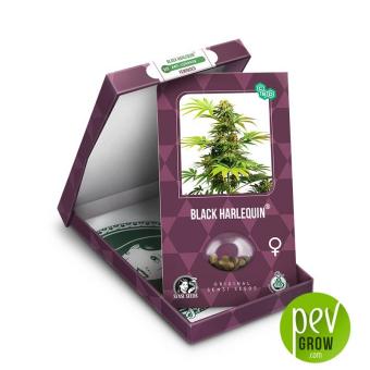 Black Harlequin package - Sensi Seeds