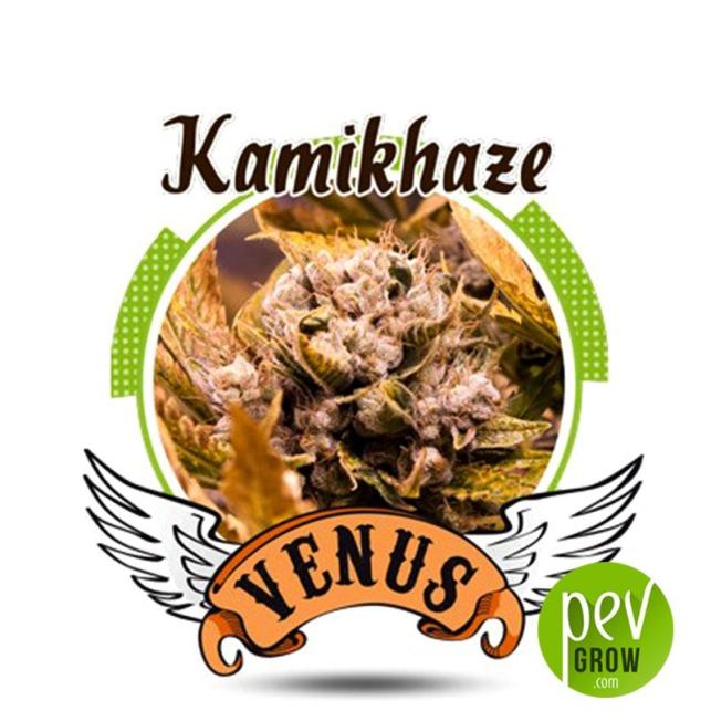 Kamikhaze - Venus Genetics