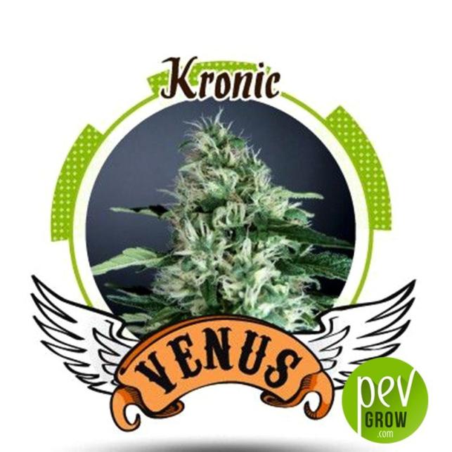 Kronic - Venus Genetics