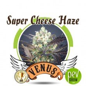 Super Cheese Haze