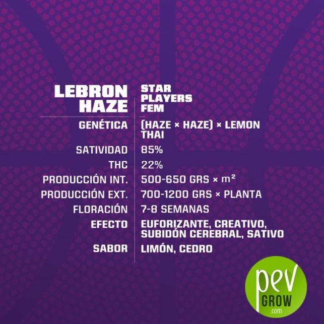 Lebron Haze - BSF Seeds