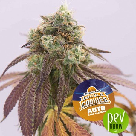 Double Cookies Auto - BSF Seeds