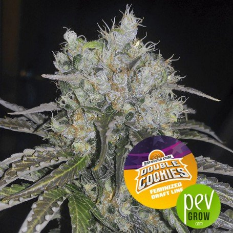 Double Cookies - BSF Seeds