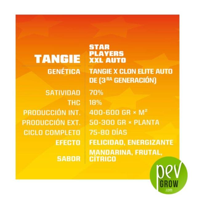 Tangie XXL Auto - BSF Seeds