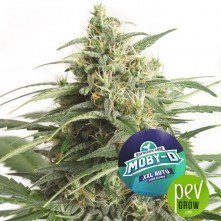Moby-D XXL Auto - BSF Seeds