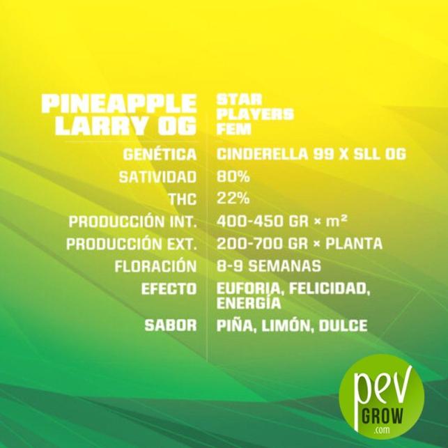 Pineapple Larry OG - BSF Seeds